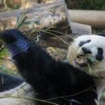ジェジュンマットパンダがクリスマスにフリーハグ?あの発言がきっかけ!